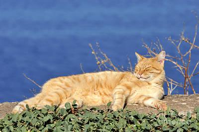 Travel Photograph - Cat In Hydra Island by George Atsametakis