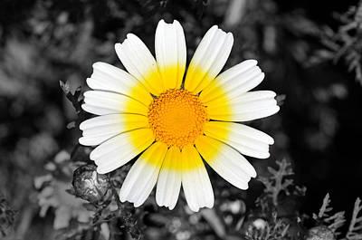 White Digital Art - Daisy by George Atsametakis
