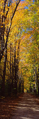 Dirt Road Passing Through A Forest Print by Panoramic Images