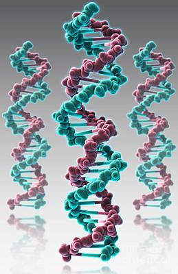 Dna, Molecular Model Print by Evan Oto
