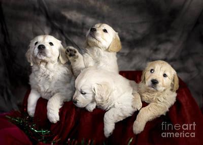 Festive Puppies Print by Angel  Tarantella