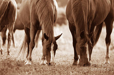 Free Photograph - Horses On The Field by Michal Bednarek