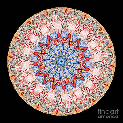 Mandala Photograph - Kaleidoscope Anatomical Illustrations Seriesi by Amy Cicconi