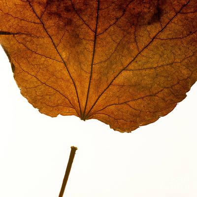 Dried Photograph - Leaf by Bernard Jaubert