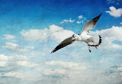 Seagull Mixed Media - Seagull by Heike Hultsch