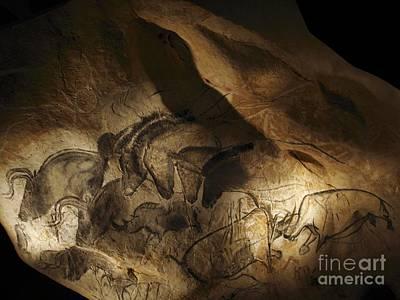 Chauvet Cave Photograph - Stone-age Cave Paintings, Lascaux by Javier Trueba/MSF