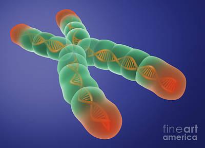 Telomere, Illustration Print by Gwen Shockey