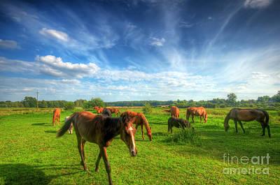 Wild Horses On The Field Print by Michal Bednarek