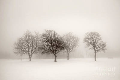 Winter Trees Photograph - Winter Trees In Fog by Elena Elisseeva