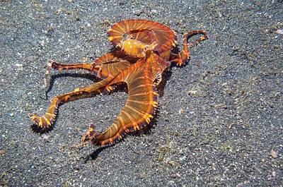 Wonderpus Octopus Print by Georgette Douwma