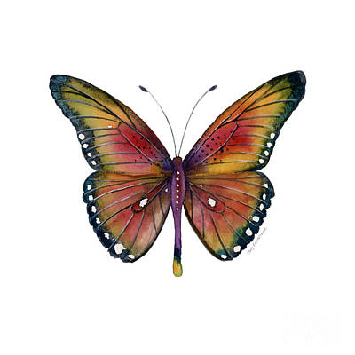 Insect Painting - 66 Spotted Wing Butterfly by Amy Kirkpatrick