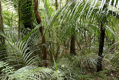 Woodlands Scene Photograph - Jungle by Les Cunliffe