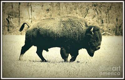 Buffalo  Print by Mickey Harkins