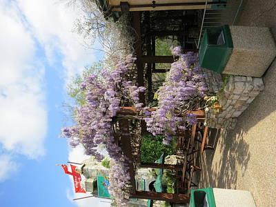 Flower Photograph - Busch Gardens - 12125 by DC Photographer