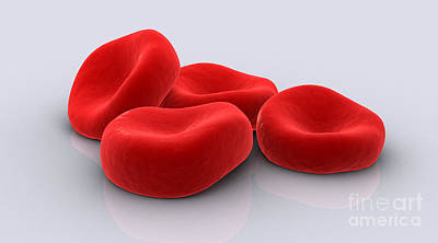Conceptual Image Of Red Blood Cells Print by Stocktrek Images