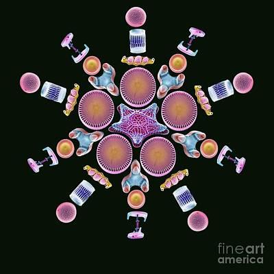Diatoms Photograph - Diatom Assortment, Sems by Steve Gschmeissner