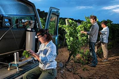 Effect Of Climate Change On Wine Print by Philippe Psaila