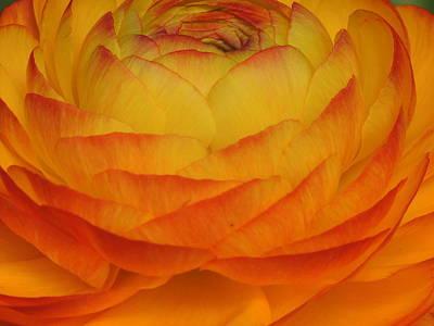 Flower Series Print by Keith Rautio