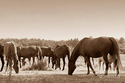 Horse Photograph - Horses On The Field by Michal Bednarek