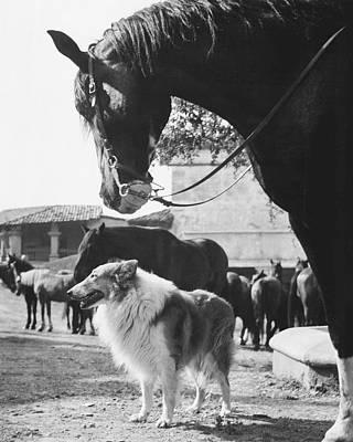 Lassie Print by Retro Images Archive
