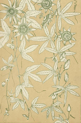 Garden Drawing - Leaves From Nature by English School