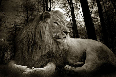 Lion Photograph - Lion  by Christine Sponchia