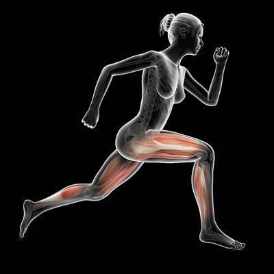 Jogging Photograph - Muscular System Of Jogger by Sebastian Kaulitzki