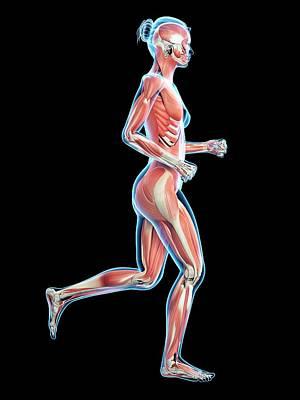 Muscular System Of Runner Print by Sebastian Kaulitzki
