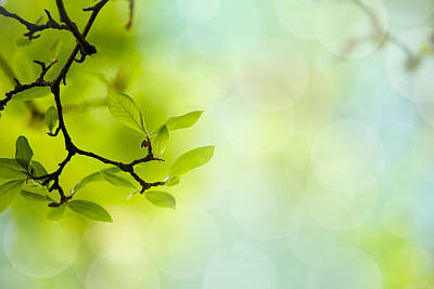 Spring Green Print by Nailia Schwarz
