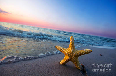 Fish Photograph - Starfish by Michal Bednarek