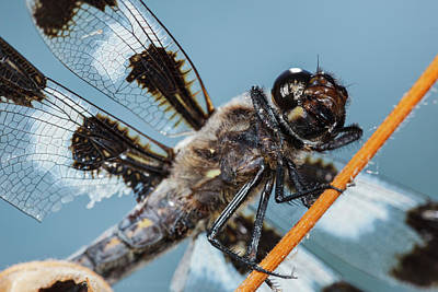 Dragonflies Photograph - Usa, Oregon, Albany, Freeway Ponds by Rick A Brown