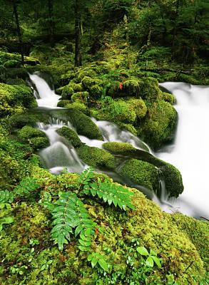 Usa, Oregon, Mt Hood National Forest Print by Stuart Westmorland