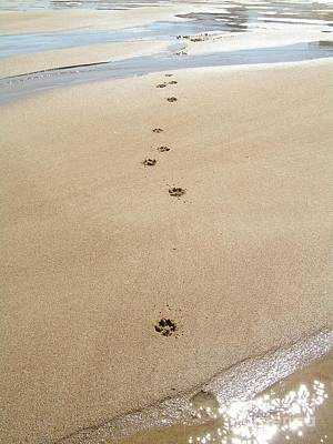 #736 D2 Paw Prints In The Sand Plum Island Print by Robin Lee Mccarthy Photography