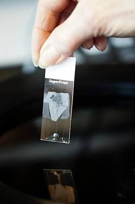 Sperm Whale Tissue Analysis Print by Thomas Fredberg