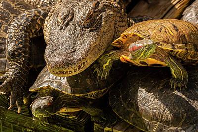 Slider Photograph - Usa, Florida, Gatorland by Jaynes Gallery