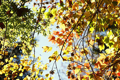 Fall Foliage Photograph - Autumn  by Les Cunliffe