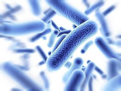 Bacteria Print by Alfred Pasieka
