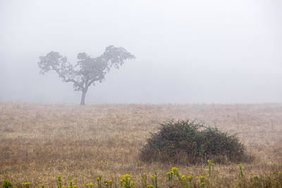 Alentejo Photograph - Cork Tree In Alentejo by Andre Goncalves