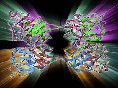 Molecular Structure Photograph - Eye Lens Protein Molecule by Laguna Design