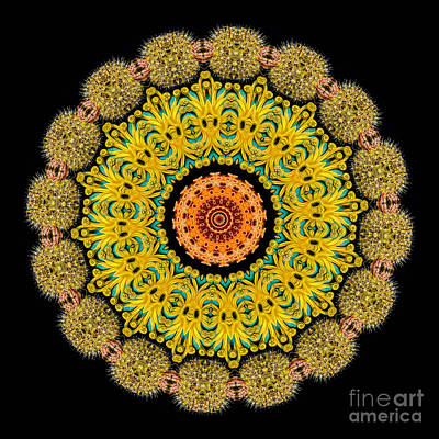 Sea Creatures Photograph - Kaleidoscope Ernst Haeckl Sea Life Series by Amy Cicconi