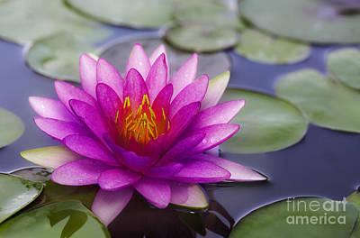 Waterlily Photograph - Pink Lotus by Anek Suwannaphoom
