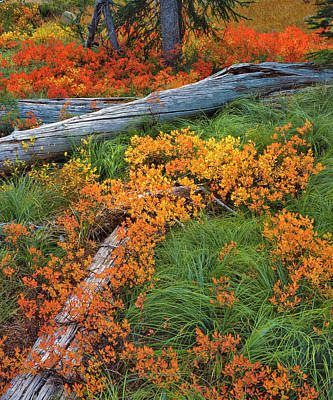 Usa, Oregon, Willamette National Forest Print by Jaynes Gallery