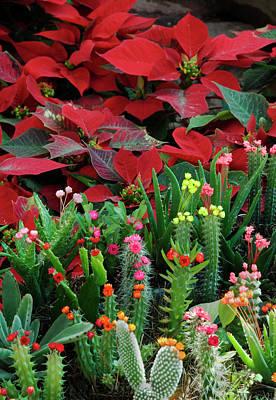 Holiday Cacti Photograph - Mexico, San Miguel De Allende by Jaynes Gallery