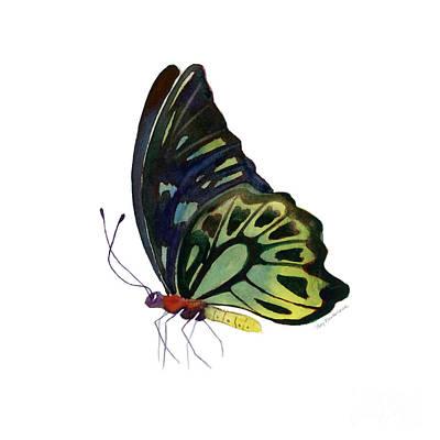 97 Perched Kuranda Butterfly Print by Amy Kirkpatrick