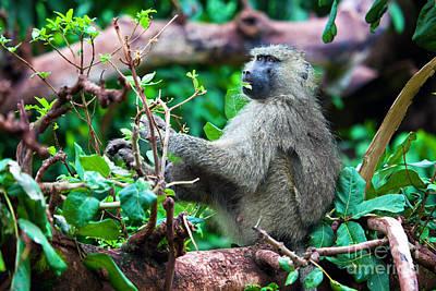 A Baboon In African Bush Print by Michal Bednarek
