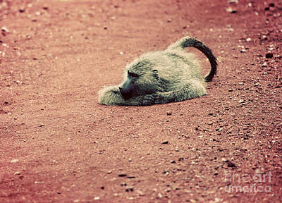 Male Photograph - A Baboon On African Road by Michal Bednarek