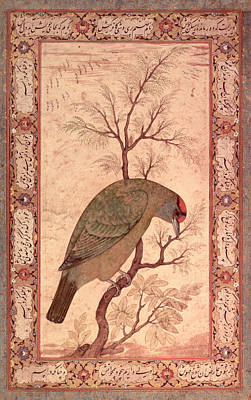 Breed Study Painting - A Barbet Himalayan Blue-throated Bird Jahangir Period, Mughal, 1615 by Mansur