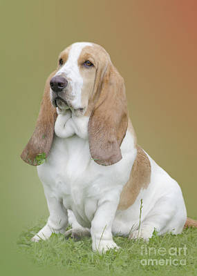 Companion Digital Art - A Basset Hound Portrait by Linsey Williams
