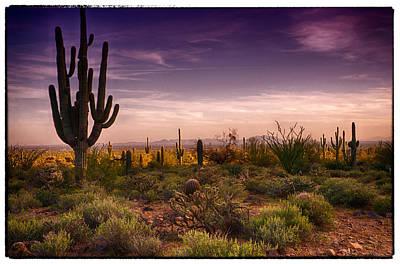 A Beautiful Desert Evening  Print by Saija  Lehtonen