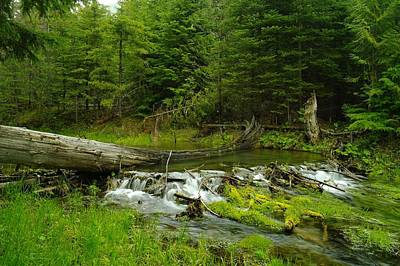 Beaver Photograph - A Beaver Dam Overflowing by Jeff Swan